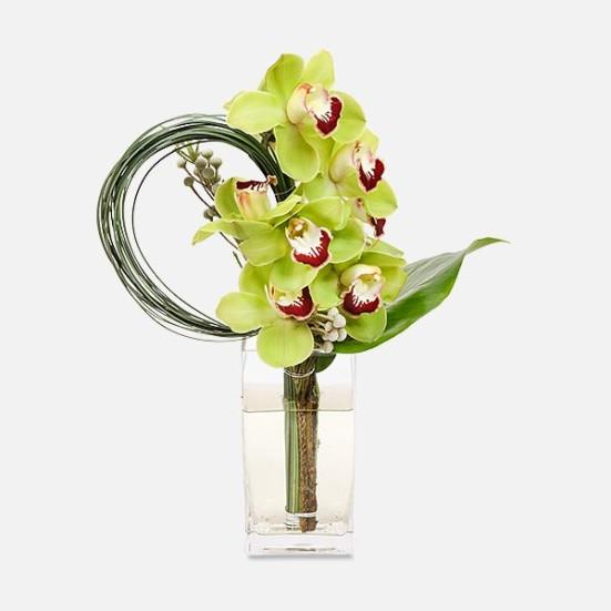 Απόλλωνας - Flowernet.gr