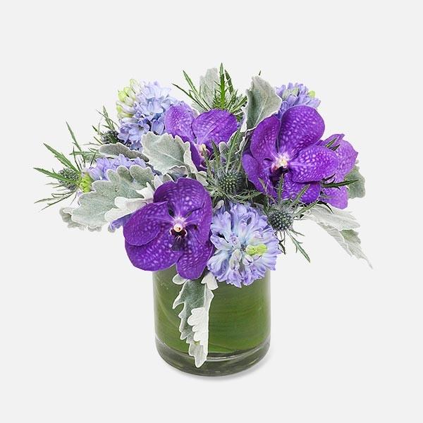 Υάκινθοι & Vanda - flowernet.gr