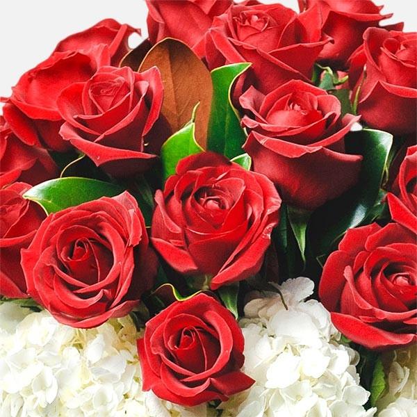 Amazing - Τριαντάφυλλα Ορτανσίες - Flowernet.gr