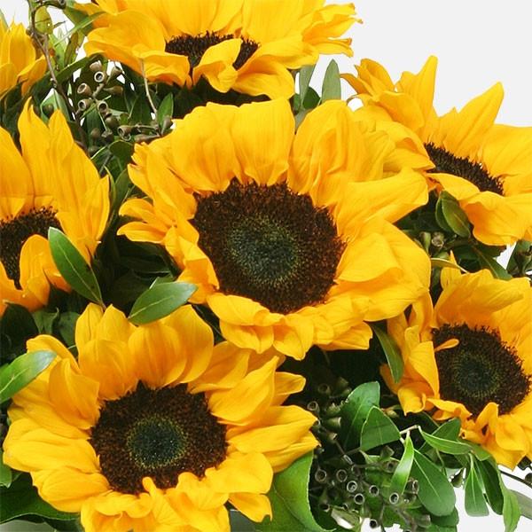Ηλίανθοι σε Βάζο - Flowernet.gr